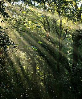 Morning on Alazan Bayou Catriona OReilly.jpg
