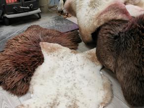 Styling Sheepskin Rugs