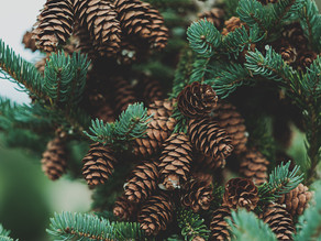 Wishing Everyone A Very Merry Christmas!