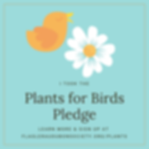 Plants for Birds 2.png