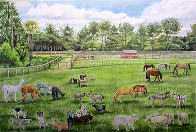Uncle Beez Rescue Farm.jpg