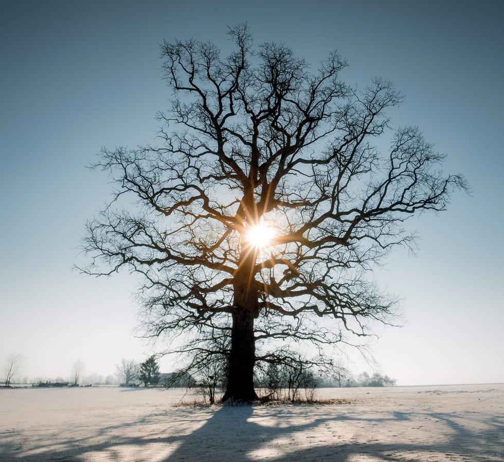07 Feb Eis Morning-9815-HDR-Bearbeitet-2