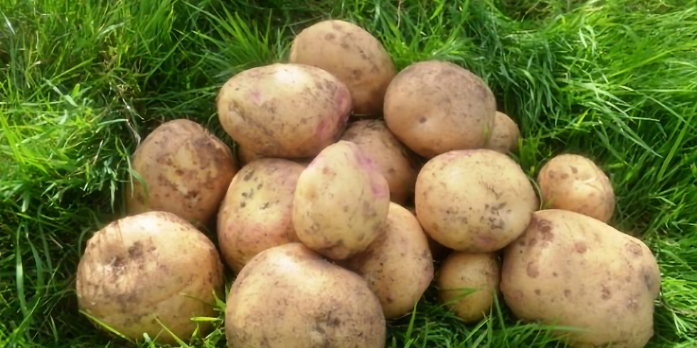 Growing together: Planting potatoes