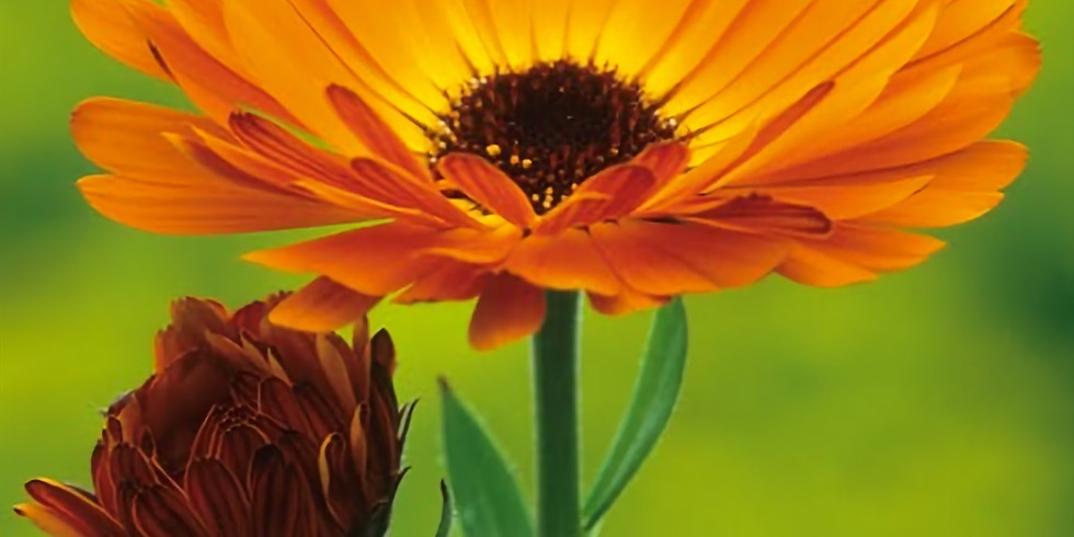 Growing together with pollinators: flowers you can plant now