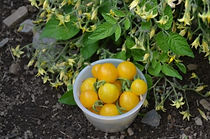 Tomato-Clementine.jpg