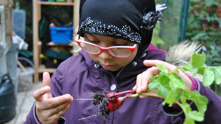 Harvesting food from the garden 2020