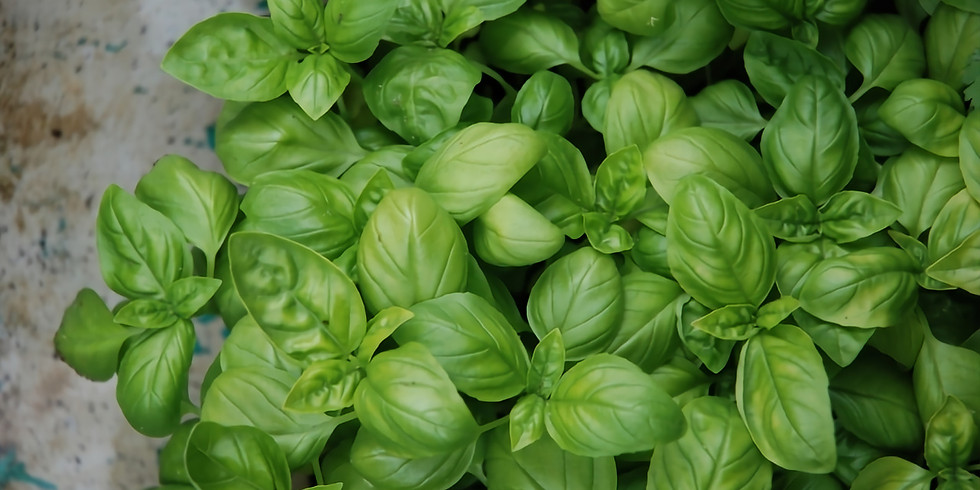 Growing together: Growing herbs