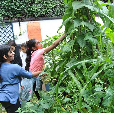 Picking-beans-27th-July-2019.jpg