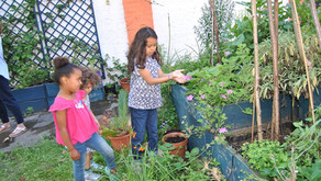 Investigating scented plants July 2020