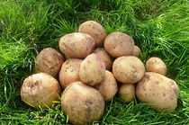 Potato-Cara-600x398-1.jpg