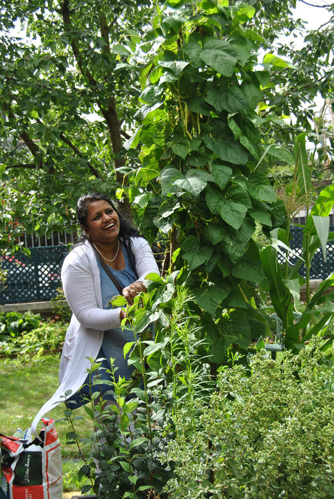 Sumathi-harvesting-beans-17th-August-201