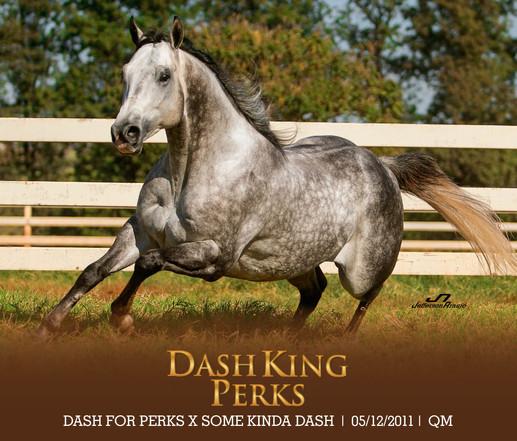 DASH KING PERKS