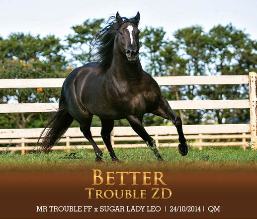 BETTER TROUBLE ZD