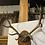 Thumbnail: Deer antlers
