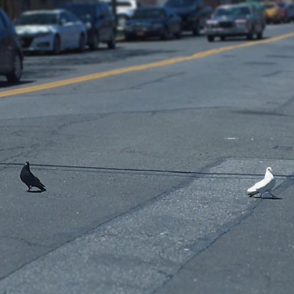 double bird.png