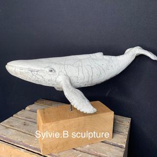 Baleine blanche