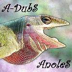 A-DubS - AnoleS