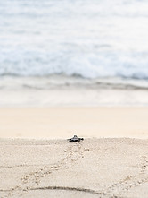Turtle Hatchling's first sight of a new home