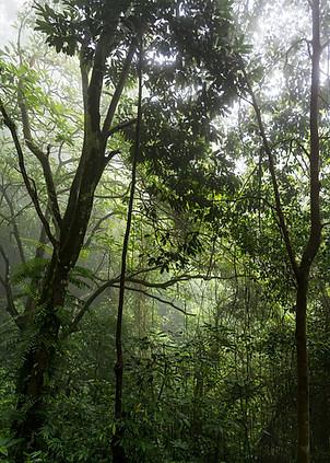 Magnificient forest