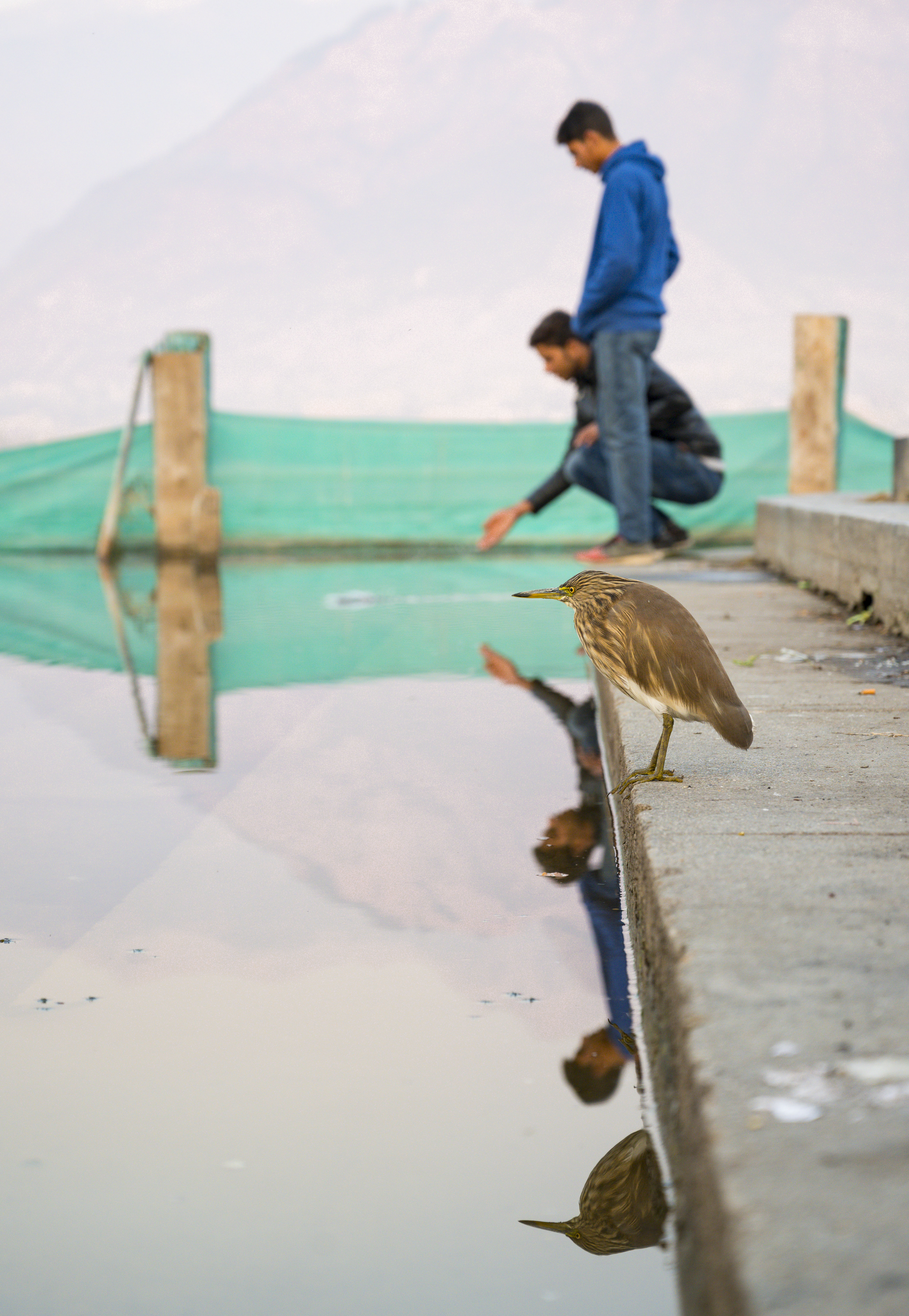 Bird and Kashmiris on Dal Lake