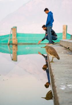 Bird and Kashmiris on Dal Lake