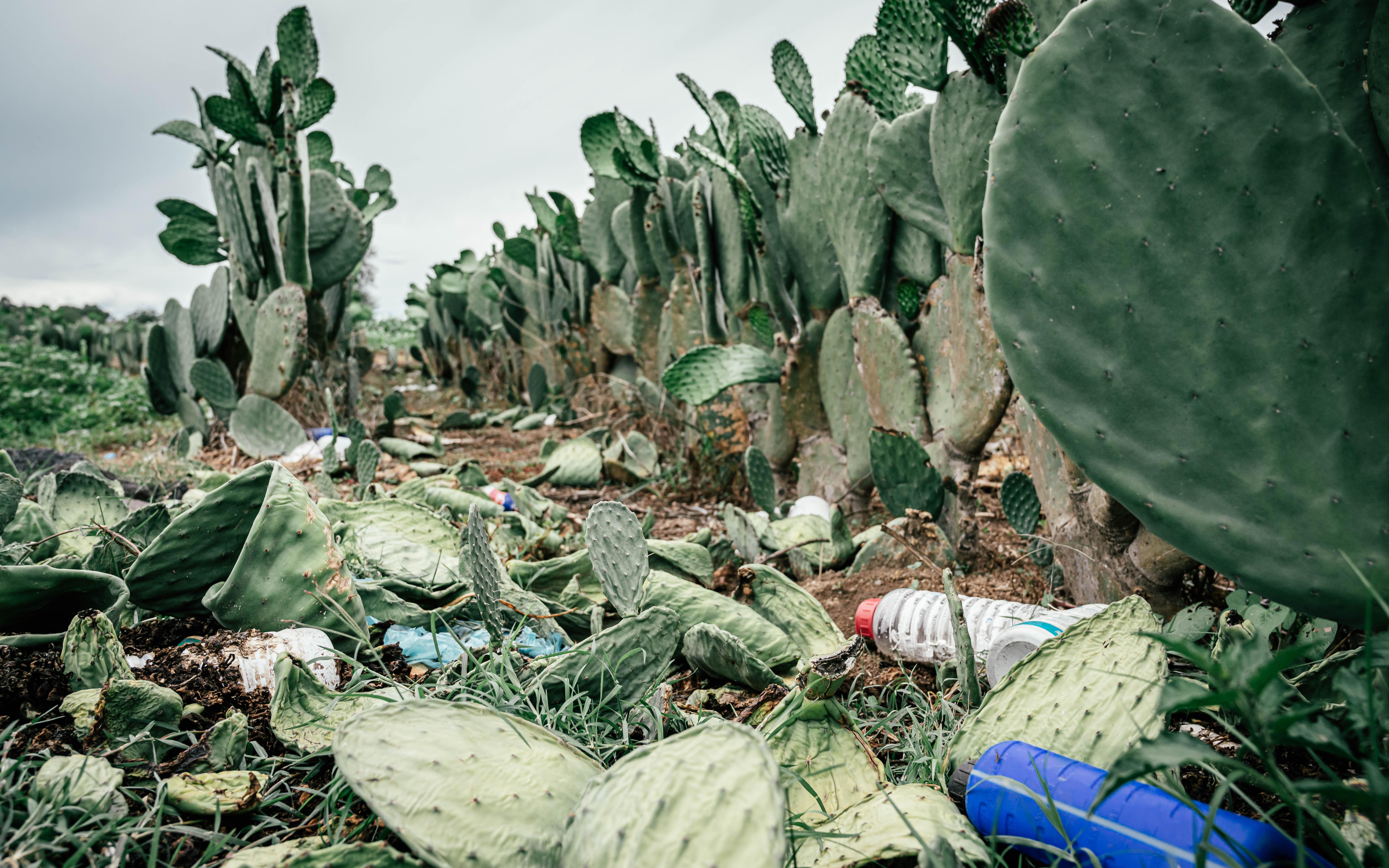 Cholula, Mexico