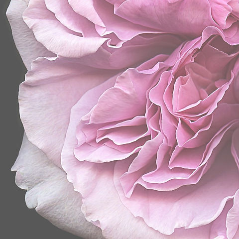 sensual%20flower_edited.jpg