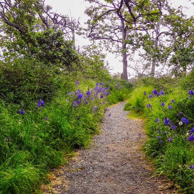 Uplands Park