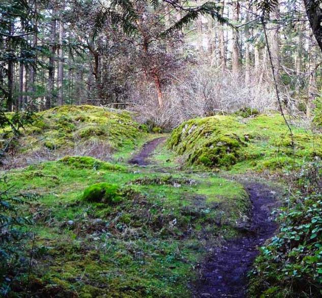 Trail through Calvert Park