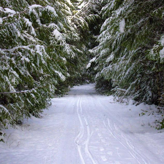 Galloping Goose Trail near Sooke River