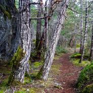 Trail near Matheson Lake