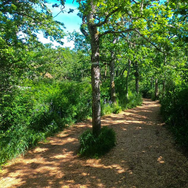 Cedar Hill Golf Course trail