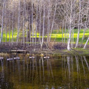 Whitehead Park at Prospect Lake
