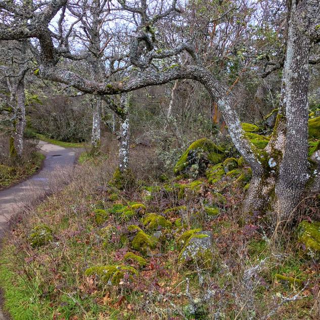Mount Doug footpath