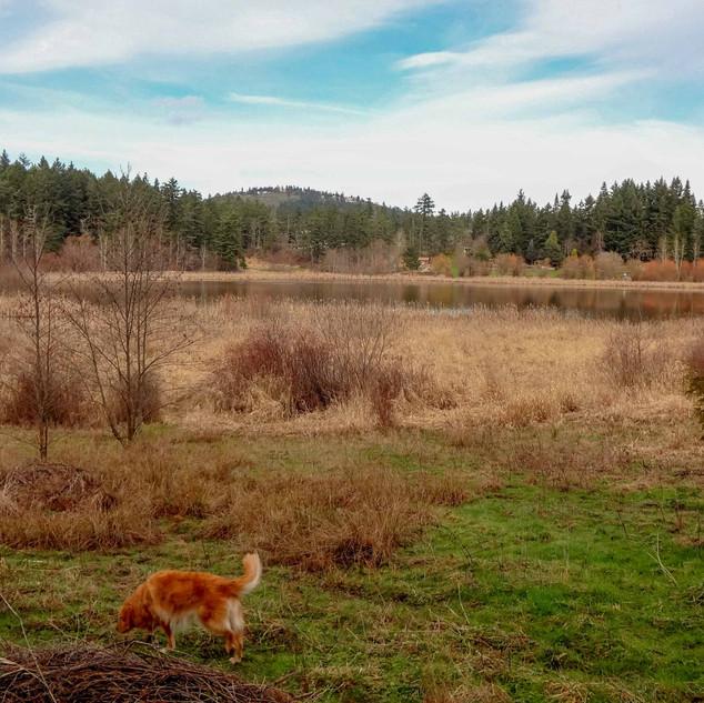 Glendale Trail behind Camosun College (Interurban)