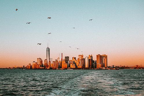Birds of Manhattan Leinwanddruck