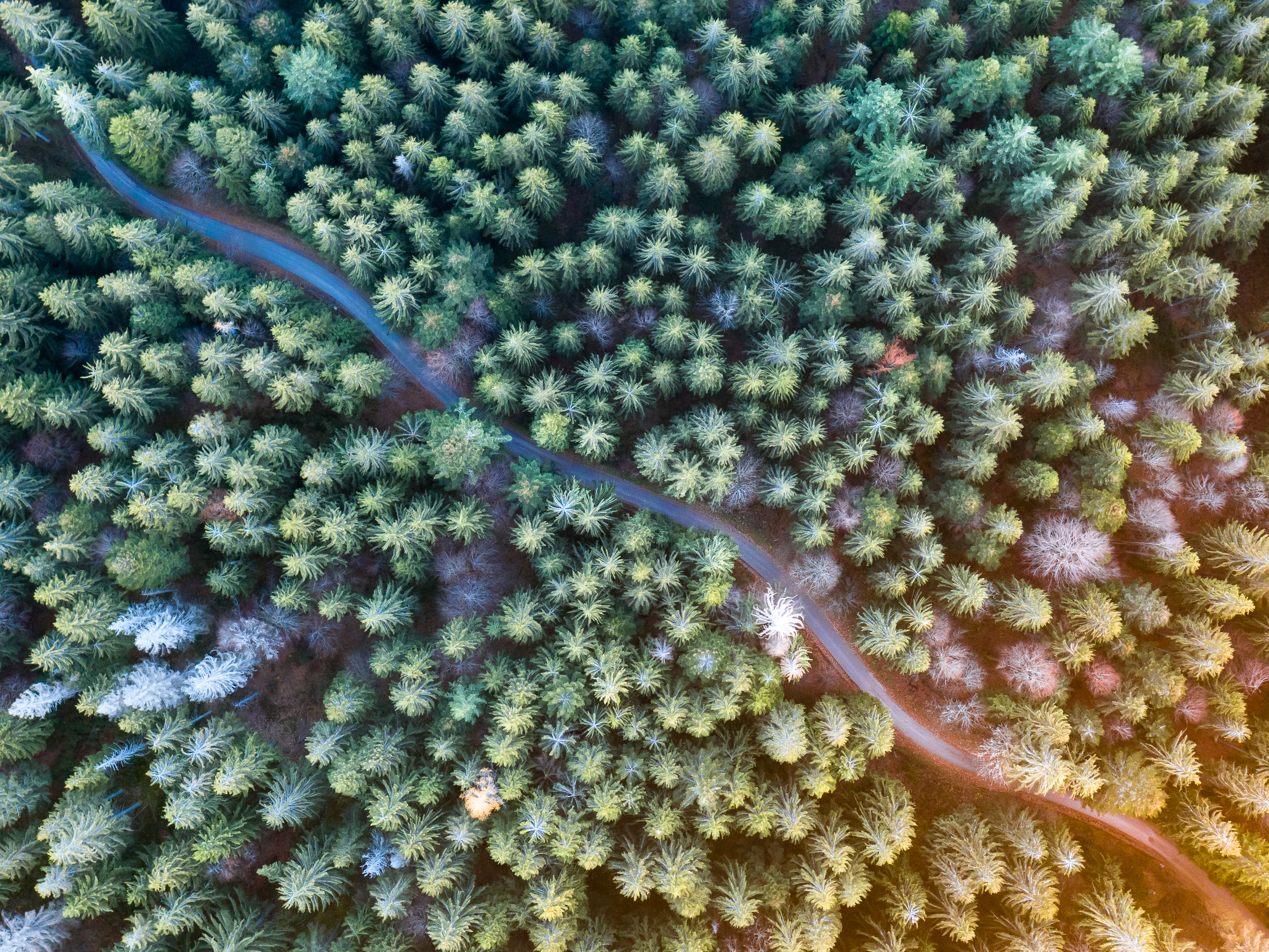 Black Forest Vertical Drone Shot