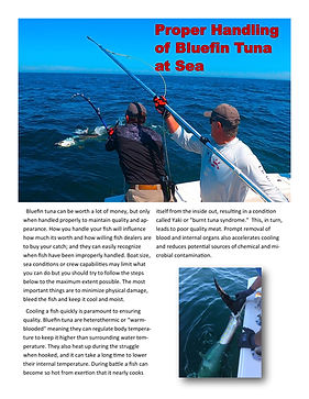 Proper Handling of Bluefin Tuna at Sea-1