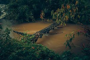 The Tree bridge.jpg