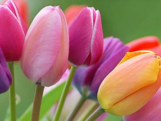 Le danger des fleurs