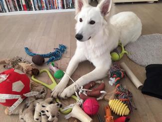 Encore un jouet pour mon toutou?