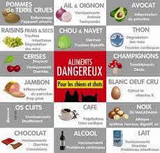 Aliments dangereux pour nos chiens!