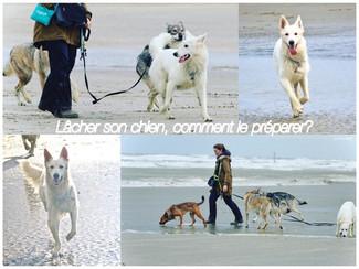 Lâcher son chien, comment le préparer?