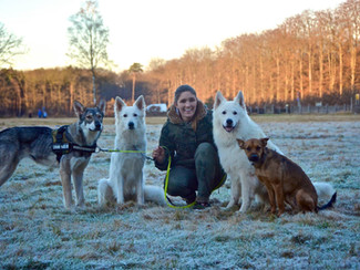 Inka, le pittbull qui n'aimait pas les autres chiens.