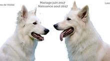 Mariage Loumi et Lasca Juin 2017