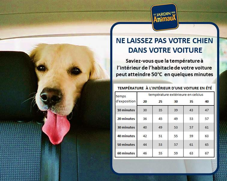 Votre chien en voiture..