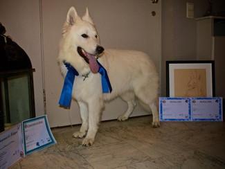 Présenter son chien en expo