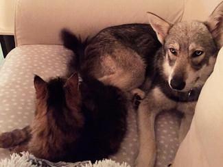 Un chat et un chien?