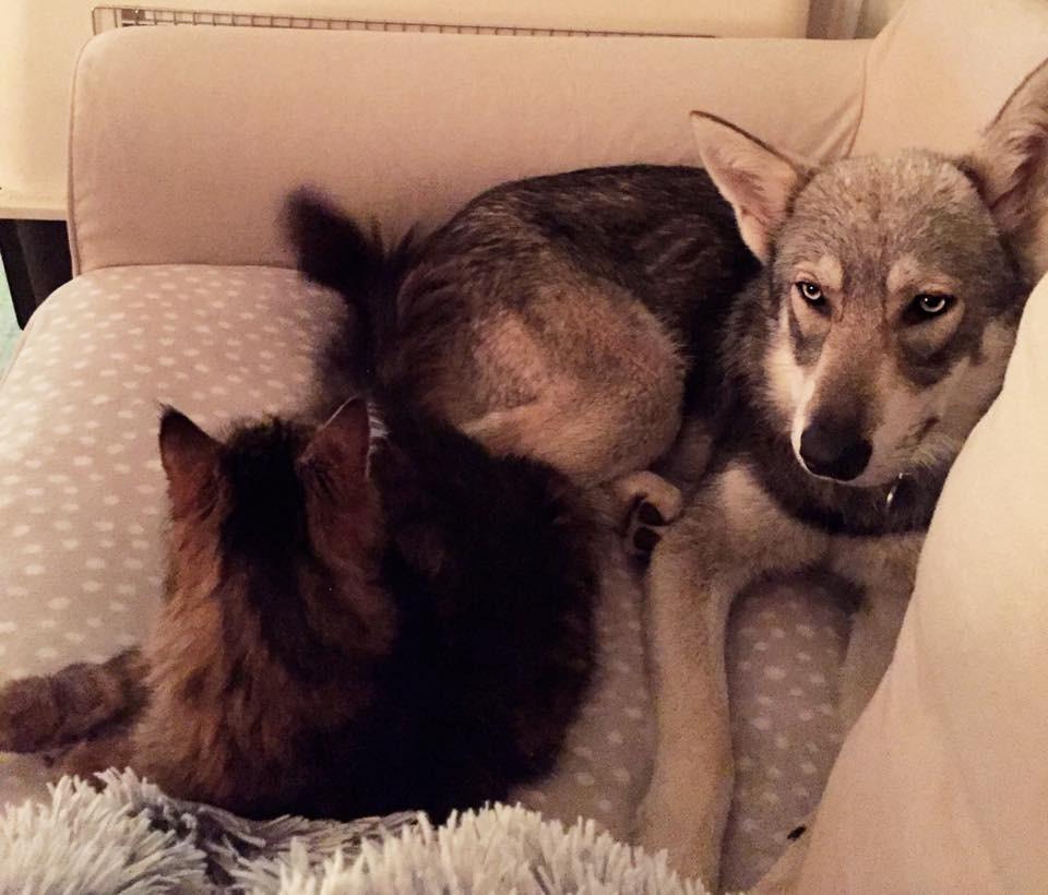 Meika et Figaro