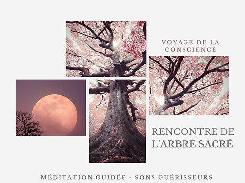 """Méditation guidée """"L'arbre sacré"""" - Voyage et Sons guérisseurs"""